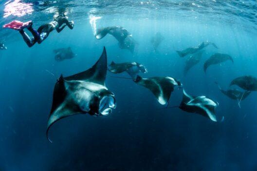 Танцы с морским дьяволом: морские приключения на Мальдивах на суперяхте
