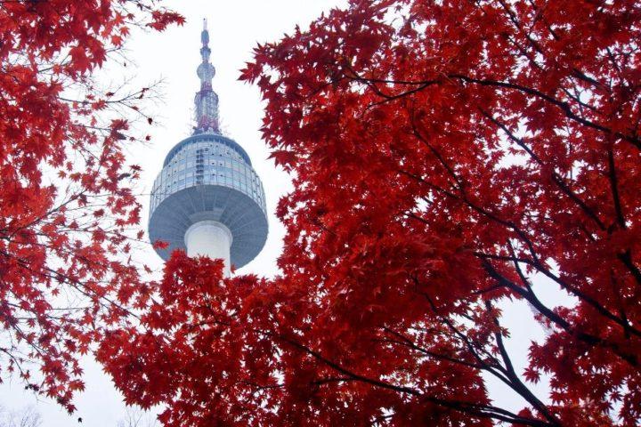 Океан Красных кленов: экспедиция по Южной Корее и Японии