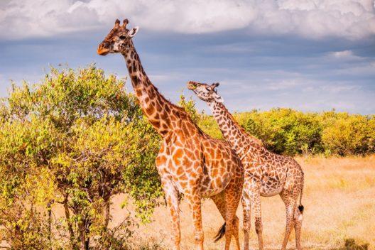 Экспедиция в Кению: большая пятерка и белоснежные пляжи