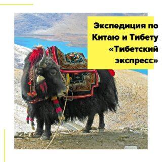 В апреле 2020 года мы снова отправляемся в Тибет! Начнется наше путешествие в самом удаленном уголке Китая, где радужно переливаются цветные горы Данься, затем мы промчимся на поезде по самой высокогорной дороге мира, чтобы погрузится в аутентичную жизнь тибетцев, заглянуть в обитель Далай-Ламы и пройти головокружительным путем от Лхасы до величественного Эвереста. И восхищенно замереть, когда рассвет озолотит вершину этой самой высокой в мире горы, которую сами тибетцы называют Джомолунгма, что означает «Божественная Мать Жизни». Язык общения – русский.  Маршрут: Синин – Чжанъе – цветные горы Данься – Тибетский экспресс – Лхаса – Шигадзе – Ронгбук – Шигадзе – Лхаса  Даты экспедиции: с 18.04 на 12 дней/11 ночей - 1950$  В стоимость включено: • все трансферы по программе (кроме первого дня); • ж/д билет в Лхасу в мягком спальном купе на 4 чел; • ж/д билеты на скоростной поезд Синин-Чжанъе-Синин; • 9 ночей в 2-местных номерах в отелях 3/3+*; • 1 ночь в общем гостевом домике по 4-6 человек; • 1 ночь в поезде в мягком купе на 4 человека; • завтраки (только в Тибете); • поездка в Геологический парк Данься (Цветные горы и Ледяная долина); • 8-дневный тур по Тибету с англоговорящим гидом; • услуги русскоговорящего сопровождающего по всему маршруту; • разрешение на въезд в Тибет.  Дополнительно оплачиваются: • международный перелет Москва-Синин / Лхаса-Москва – от 615$; • китайская виза, самостоятельное оформление (подробности здесь) – 72$; • самостоятельный трансфер в первый день; • самостоятельное питание – 20-30$ в день; • медицинская страховка – 2$ в день; • входные билеты и чаевые в Тибете – 50$; • входные билеты в Китае – 30$. Подробности в direct или по почтеcheaptripexpedition@gmail.com