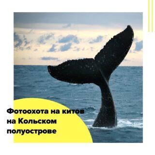 Фотоохота на китов на Кольском полуострове с кешбэком!  А вы знали, что для того, чтобы увидеть кита, не нужно лететь на другой край Земли – достаточно просто приехать в Мурманск? В июне в залив заходит на нерест мойва, а вслед за ней прямо к берегам Баренцева моря приходят киты, и есть хорошие шансы увидеть косатку, малого поласатика, гренландского кита, высоколобого бутылконоса, горбатого кита и даже кашалота!  Всего за три дня мы успеем очень многое! Нас ждут: знакомство с Мурманском и экскурсия на ледокол «Ленин» со специалистом компании «Росатом». Териберка с ее заброшенными кораблями, каменным пляжем и океанским водопадом. Морская прогулка на баркасе в поисках китов и наблюдение за морскими гигантами, приводящее городских жителей в первобытный восторг. Но даже если нам не посчастливится увидеть китов, то уж с дельфинами и тюленями мы точно познакомимся! Заодно порыбачим и устроим барбекю из своего улова. А перед вылетом соберемся на обед и попробуем блюда северной кухни и местные деликатесы (обед оплачивается дополнительно).  Язык общения – русский!  Маршрут: Мурманск – Териберка – Мурманск  Даты экспедиции: с 18.06 на 3 дня/2 ночи (по 20.06) 26500/39000* рублей стоимость на 1 человека, без авиа/с авиа*  Подробную программу тура по дням запрашивайте по мейлу cheaptripexpedition@gmail.com.  В стоимость включено: - перелет Москва – Мурманск – Москва, если выбрали вариант с авиа; - транспорт с водителем на время поездки, все переезды и трансферы по программе (Внимание! Трансфер из/в аэропорт организуется к рекомендованным руководителем рейсам); - размещение в двухместных номерах с удобствами гостинице «Норд Пилигрим»; - питание – завтраки и дегустационный обед; - морская прогулка в Териберке; - экскурсия на ледокол «Ленин»; - сопровождение турлидера-экскурсовода на протяжении всего маршрута.  Дополнительно оплачивается: - перелет Москва – Мурманск – Москва (от 12500 руб.), если выбрали вариант без авиа; - обеды и ужины, не включенные в программу; - сувениры и лич