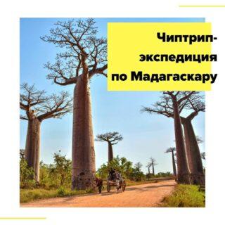 Мадагаскар – блудный сын Африки, отколовшийся миллионы лет назад от родного континента и забравший с собой уникальные растения и животных. Здесь живут в мире и согласии 97 видов лемуров, а вместе с ними дикие кошки фоссы и циветты, причем абсолютное большинство этих видов обитает только на Мадагаскаре. Буйство зеленых лесов перемежается с буйством лесов каменных, водные дороги конкурируют с дорогами наземными. Бедность и быт местных жителей шокируют, а красота здешних мест настолько завораживает, что понимаешь – все предыдущие путешествия были лишь разминкой перед встречей c действительно труднодоступной и нетронутой природой!  Во время путешествия нам предстоит: - исследовать центральную и западную части Мадагаскара; - покорить вершину самого высокого Цинги; - прогуляться по белоснежным пляжам Морондавы; - поиграть с пушистыми лемурами; - насладиться закатом у знаменитой Аллеи Баобабов.  Язык общения – русский.  Маршрут: Антананариву – парк Перине – Андасибе – Антананариву – Миандривазо – заповедник Киринди – река Тзирибиина – Бекопака – Цинги-де-Бемараха – Морондава – Анцирабе  Даты экспедиции: с 30 мая и 9 июля на 8 дней/7 ночей - 1750$ + авиабилеты.  В стоимость включено: • групповые трансферы по программе (полноприводные джипы с водителями с 4 по 11 день, бензин и микроавтобус с 1 по 3 день); • паромные переправы; • трансферы из аэропорта/в аэропорт к рекомендованным рейсам; • двухместное размещение в отелях 4* и лоджах по программе; • завтраки; • все экскурсии по программе; • русский сопровождающий.  Дополнительно оплачиваются: • международный перелет Москва – Антананариву – Москва от 640 евро; • обеды и ужины – около 15-20 евро в день; • медицинская страховка – 2 евро в день; • личные расходы, чаевые гидам – около 300 евро.  Подробности в direct или по почтеcheaptripexpedition@gmail.com